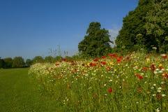 Paisaje con el prado de la flor salvaje Foto de archivo libre de regalías