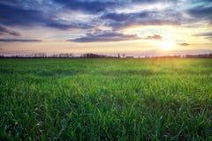 Paisaje con el prado y el sol verdes. Puesta del sol. Foto de archivo libre de regalías