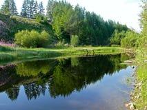Paisaje con el río y el bosque del verano Foto de archivo libre de regalías