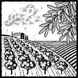 Paisaje con la arboleda verde oliva blanco y negro Imagenes de archivo