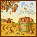 Paisaje con la cosecha de la manzana Fotografía de archivo libre de regalías