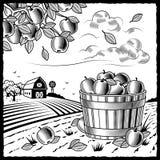 Paisaje con la cosecha de la manzana blanco y negro Fotos de archivo libres de regalías