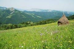 Paisaje con la hierba verde y el cielo azul Imagen de archivo libre de regalías