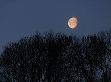Paisaje con la luna Fotos de archivo