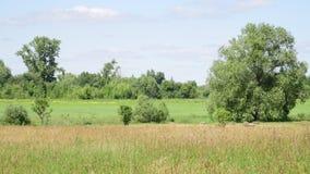 Paisaje con la naturaleza rusa en día de verano caliente metrajes