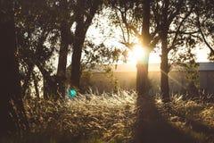 Paisaje con la puesta del sol árboles foto de archivo