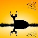 Paisaje con la silueta del macho de los ciervos en la puesta del sol Fotografía de archivo