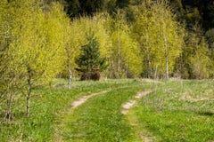 Paisaje con la trayectoria del camino a Forest Trees At Spring Imágenes de archivo libres de regalías