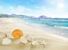 Paisaje con las cáscaras en la playa arenosa Fotos de archivo libres de regalías