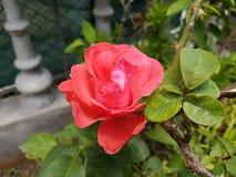Paisaje con las flores Imágenes de archivo libres de regalías