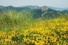 Paisaje con las flores amarillas Fotos de archivo