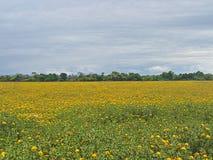 Paisaje con las flores amarillas Foto de archivo