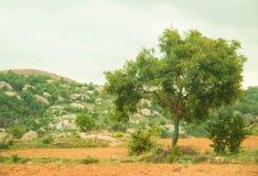Paisaje con las montañas y el contexto del árbol Imagen de archivo