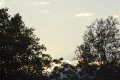 Paisaje con los árboles Fotos de archivo