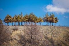 Paisaje con los árboles de pino en Georgia Fotografía de archivo