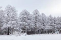 Paisaje con los árboles nevados Imágenes de archivo libres de regalías