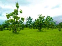 Paisaje con los árboles y el cielo azul fotos de archivo libres de regalías