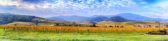 Paisaje con los viñedos del otoño de la ruta del vino Francia, Alsacia Fotografía de archivo libre de regalías