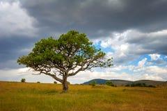 Paisaje con nadie árbol en África Fotos de archivo