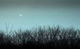 Paisaje con niebla Fotos de archivo libres de regalías