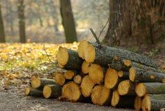 Paisaje con registros aserrados, tala de árboles, Fotografía de archivo