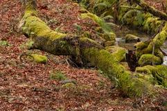 Paisaje con texturas del otoño Foto de archivo libre de regalías