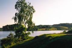 Paisaje con un árbol del lago y de abedul Fotografía de archivo