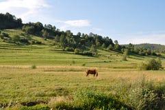 Paisaje con un caballo Foto de archivo libre de regalías