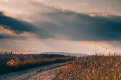 Paisaje con un camino pintoresco a través de campos de la lavanda en Provence, Francia imagenes de archivo