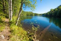Paisaje con un lago del bosque Fotos de archivo libres de regalías