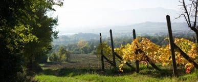 Paisaje con un viñedo en Italia Imágenes de archivo libres de regalías
