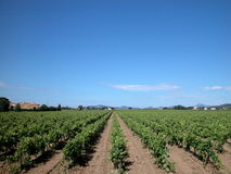 Paisaje con wineyards, Francia del país Foto de archivo