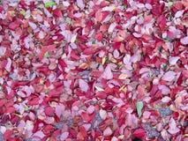 Paisaje Conegliano Italia del color del otoño imágenes de archivo libres de regalías