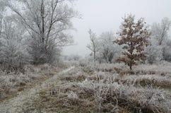 Paisaje congelado Imagen de archivo
