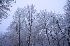 Paisaje congelado de los árboles Foto de archivo libre de regalías
