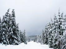Paisaje congelado en el bosque negro imagenes de archivo