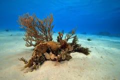 Paisaje coralino Imágenes de archivo libres de regalías