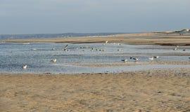 Paisaje costero en Crane Beach Fotografía de archivo libre de regalías