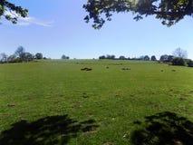 Paisaje, Crookham, Northumberland, Inglaterra Imagenes de archivo