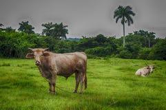 Paisaje cubano del campo Foto de archivo