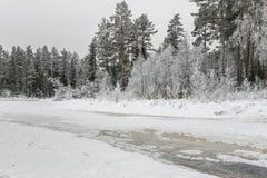 Paisaje de árboles en el lago congelado en invierno Foto de archivo libre de regalías