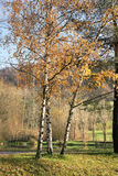 Paisaje de Alsacian Foto de archivo