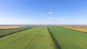 Paisaje de argumentos agrícolas en el fondo del cielo azul, vídeo aéreo almacen de video