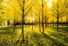 Paisajede AutumnFoto de archivo libre de regalías