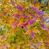 Paisajede AutumnImagen de archivo
