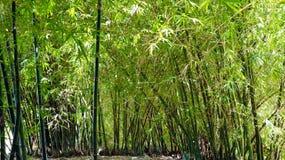 Paisaje de Bamboooo detrás de mi casa fotografía de archivo