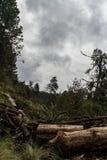 Paisaje de Deforestated durante un alza en la montaña en un día nublado Fotografía de archivo