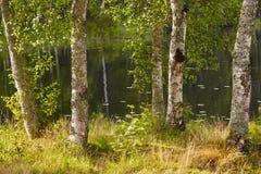 Paisaje de Finlandia con el bosque y el lago del abedul Fondo finlandés Imagenes de archivo
