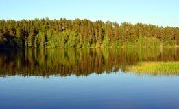 Paisaje de Forest Lake Foto de archivo