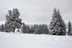 Paisaje de hadas del invierno con los abetos Imagen de archivo libre de regalías